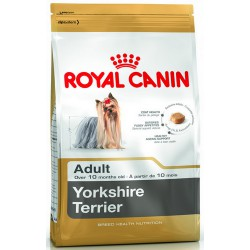 Royal Yorkshire Terrier...